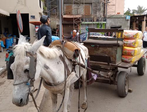 Marocco prime impressioni